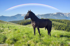 Wild horses in the Carpathians Royalty Free Stock Photography