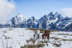 Wild horses in Caucasus mountains Stock Photo