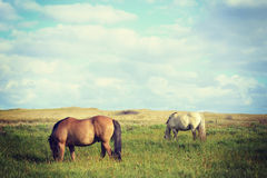 Wild horses couple landscape in vintage style royalty free stock photos
