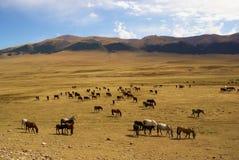 Wild horses in desert mountains Royalty Free Stock Image