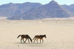 Wild feral horses desert mountains, Namibia, Africa Royalty Free Stock Image