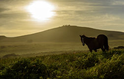 Wild horses , Easter Island, Chile. Royalty Free Stock Photo