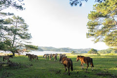 Wild horses eat the glass by the lake Royalty Free Stock Photography