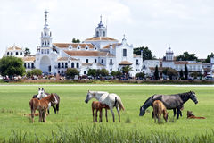 Wild horses and famous pilgrimage Church El Rocio Stock Image