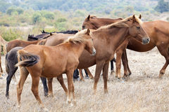 Wild horses. In a field Stock Image