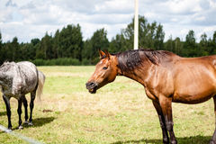 Wild horses in the field. Close-up shot of wild horses in the field stock photo