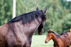 Wild horses in the field. Close-up shot of wild horses in the field stock photos