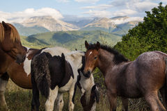 Wild horses free in the park Royalty Free Stock Image