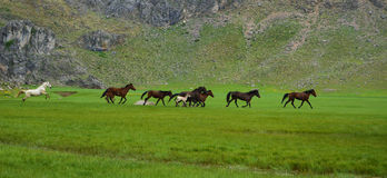 Wild horses and freedom Royalty Free Stock Image