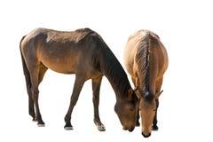 Wild horses in garub desert Royalty Free Stock Photo
