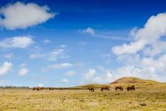 Wild horses grazing against mountain landscape Stock Photo