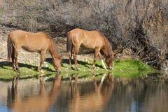 Wild Horses Grazing Along River Stock Photo