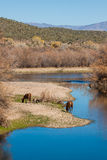 Wild Horses Grazing Along Salt River Royalty Free Stock Images