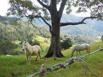 Wild horses stock image