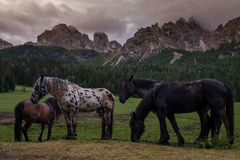 Wild horses is grazing near mountain forest landscape. Stock Photography