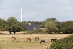 Wild horses grazing Stock Photos