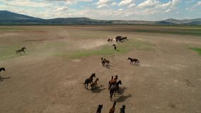 Natural horses. Wild horses Kayseri in Turkey, The Concept Of Freedom, Strength,Ä°ndependence and Speed. stock footage