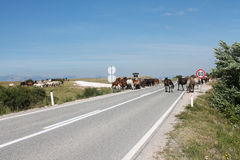 Wild horses on the main road near Livno Stock Photography