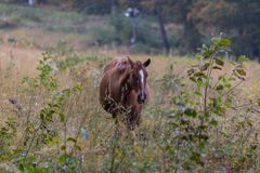 Wild horses on a meadow Stock Photography