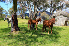 Wild horses in meadow Stock Photos