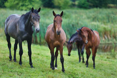 Wild horses. On the meadow at the summer time stock photo