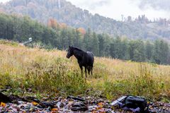 Wild horses on a meadow Stock Image