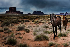 Wild Horses Monument Valley Royalty Free Stock Image
