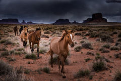 Wild Horses Monument Valley Stock Images