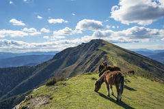 Wild horses in the mountain. Stock Image