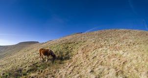 Wild horses and mountain scenic. Stock Photo