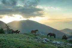 Wild horses in mountain Royalty Free Stock Photo