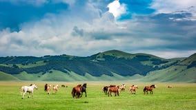 Wild horses in mountain valley, Umbria Stock Photos