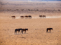 Wild Horses of the Namib desert Stock Photo