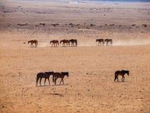 Wild Horses of the Namib desert Stock Photo