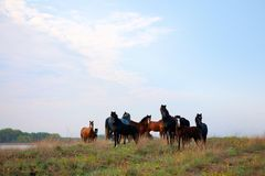 Wild horses in the National Park Royalty Free Stock Photos