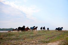 Wild horses in the National Park Stock Image