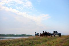 Wild horses in the National Park Stock Photography