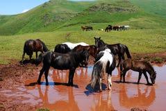 Wild horses in nature Stock Photo
