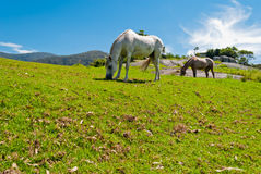 Wild horses in nature. Wild horses in a beautiful natural place Stock Photos