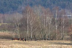 Wild horses in the nature reserve. The Wild horses in the nature reserve Royalty Free Stock Image