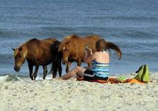 Free WILD HORSES OF ASSATEAGUE ISLAND Royalty Free Stock Photos - 25607078