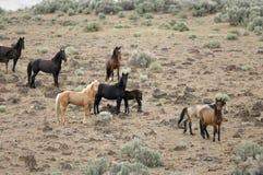 Wild Horses On Hillside Royalty Free Stock Photos