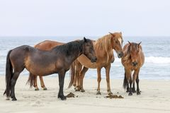 Free Wild Horses On The Beach Stock Photography - 118383902