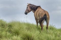 Wild horses in outerbanks of North Carolina royalty free stock photo
