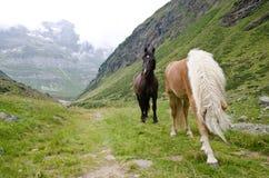 Wild horses Stock Photos