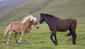 Wild horses playing Stock Photography