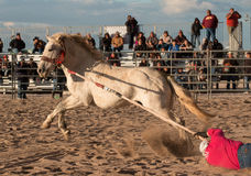 Wild Horses at the Professional Rodeo. Rodeos are very popular in the western states of the United States and in Canada Stock Photography