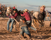 Wild Horses at the Professional Rodeo. Rodeos are very popular in the western states of the United States and in Canada Stock Photo