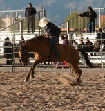 Wild Horses at the Professional Rodeo. Rodeos are very popular in the western states of the United States and in Canada Royalty Free Stock Images