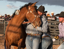 Wild Horses at the Professional Rodeo Royalty Free Stock Photo